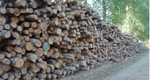 Small biomass tariff reduction results in increased applications